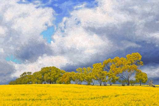 Canola in Bloom - Australian Landscape Oil Painting by Michael Hodgkins