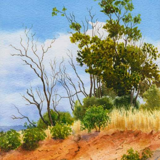 Bindoon Hillside - Australian Landscape Watercolour Painting by Michael Hodgkins