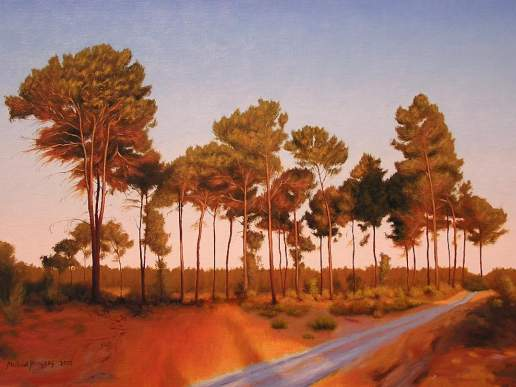 Gnangara Pines 2 - Australian Landscape Oil Painting by Michael Hodgkins