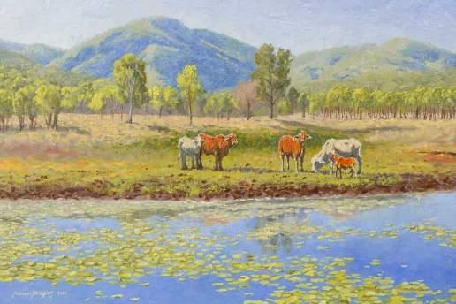 Mulgrave Cattle - Australian Landscape Oil Painting by Michael Hodgkins